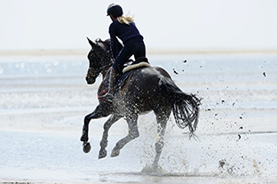 Aider le cheval à mieux récupérer après l'effort