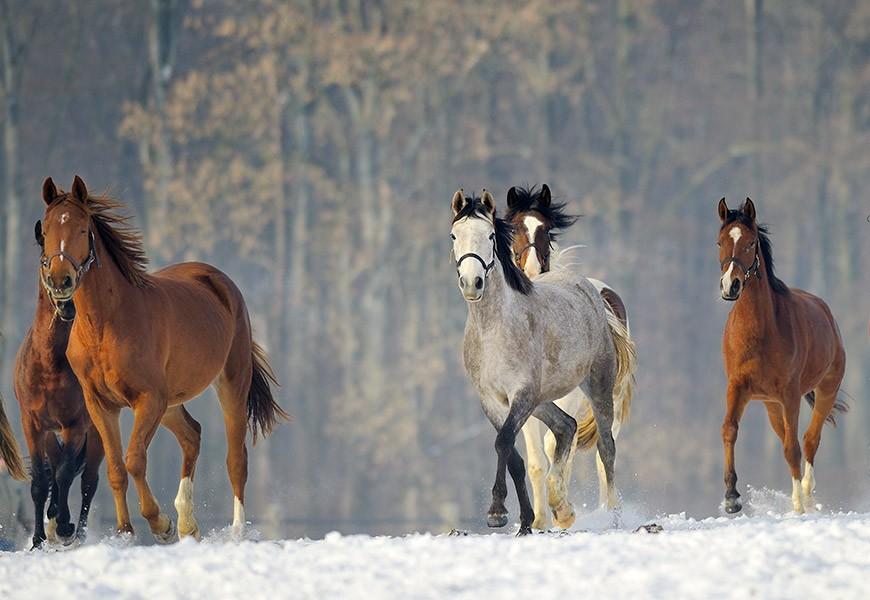 Comprendre le stress du cheval